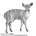 How to Draw a Nyala