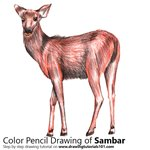 How to Draw a Sambar Deer