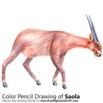 How to Draw a Saola