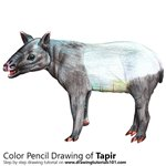 How to Draw a Tapir