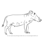 How to Draw a Warthog