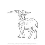 How to Draw a Wild Goat