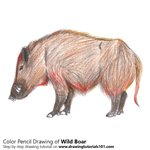 How to Draw a Wild Boar