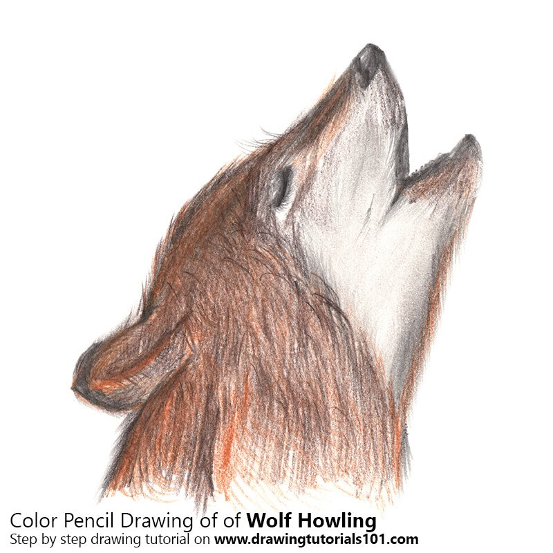 Wolf Howling Color Pencil Drawing