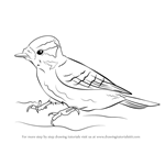 How to Draw a Downy Woodpecker