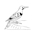 How to Draw a Northern Flicker