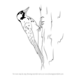 How to Draw a Red-Cockaded Woodpecker