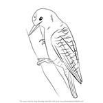 How to Draw a Woodpecker