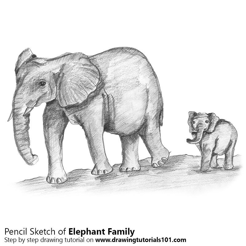 Pencil Sketch of Elephant Family - Pencil Drawing