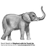 How to Draw an Elephant with its Trunk Up