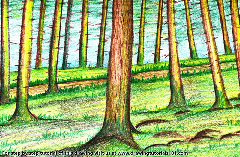 Forest Trees Color Pencil Drawing