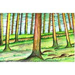 How to Draw Forest Trees