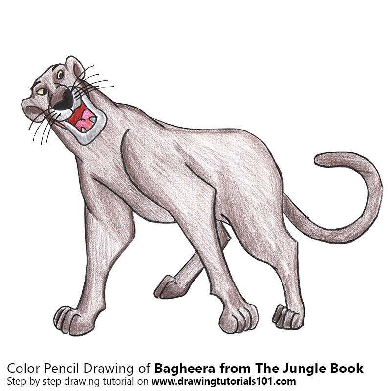 Bagheera from The Jungle Book Color Pencil Drawing