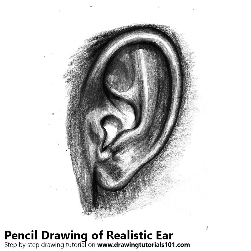 Pencil Sketch of Realistic Ear with Pencils - Pencil Drawing