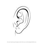 How to Draw Realistic Ear with Pencils