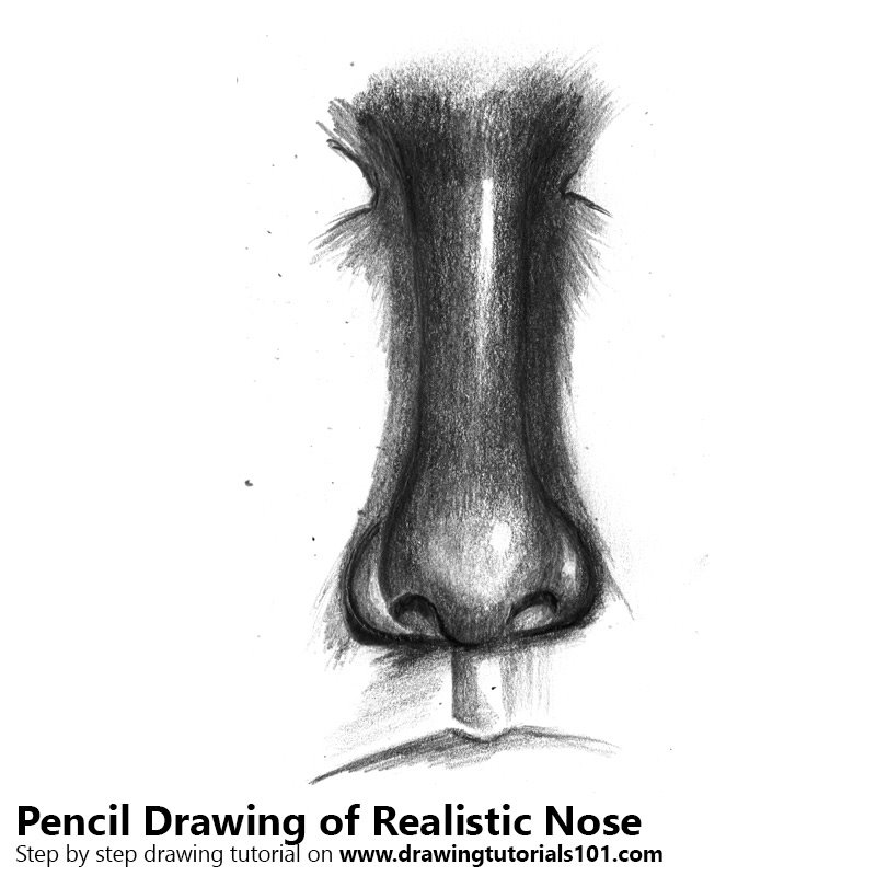 Pencil Sketch of Realistic Nose - Pencil Drawing