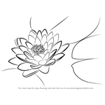 How to Draw Lily Pad