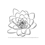 How to Draw Water Lily Flower
