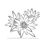 How to Draw Water Lily Plant