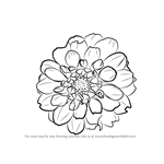 How to Draw Dahlia Flower