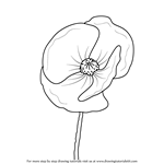 How to Draw Poppy Flower