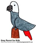 How to Draw a Grey Parrot for Kids