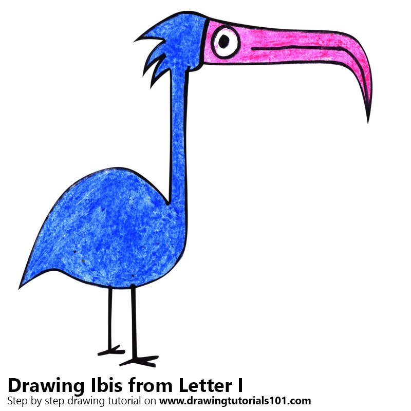 Ibis from Letter I Color Pencil Drawing