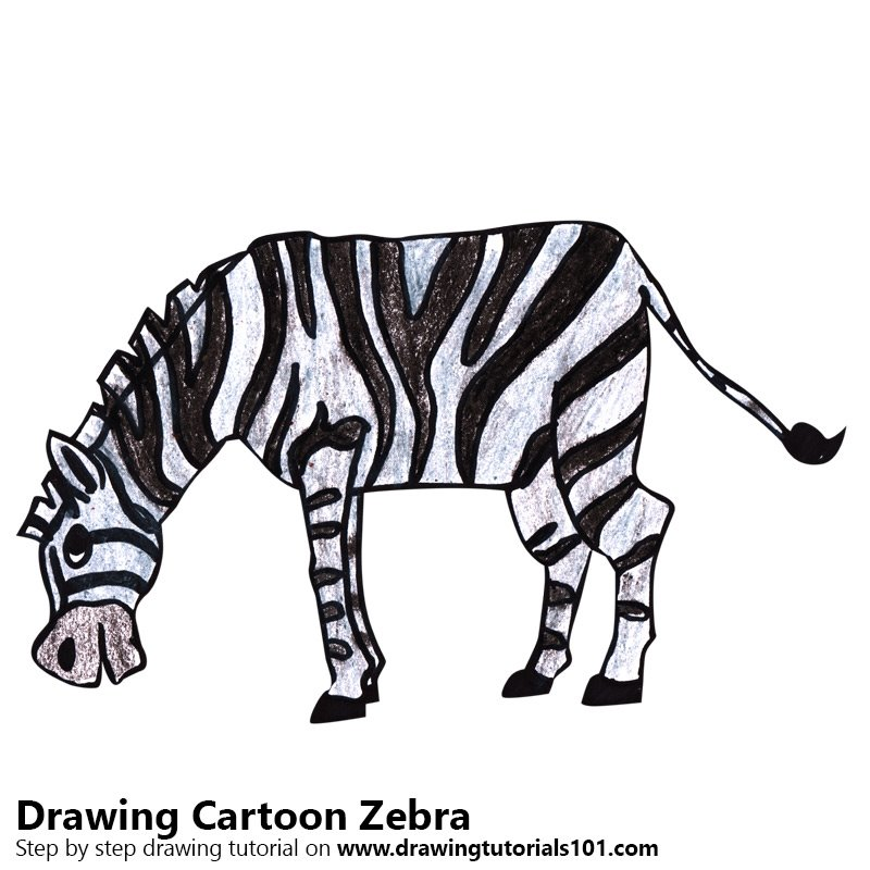 Cartoon Zebra Color Pencil Drawing